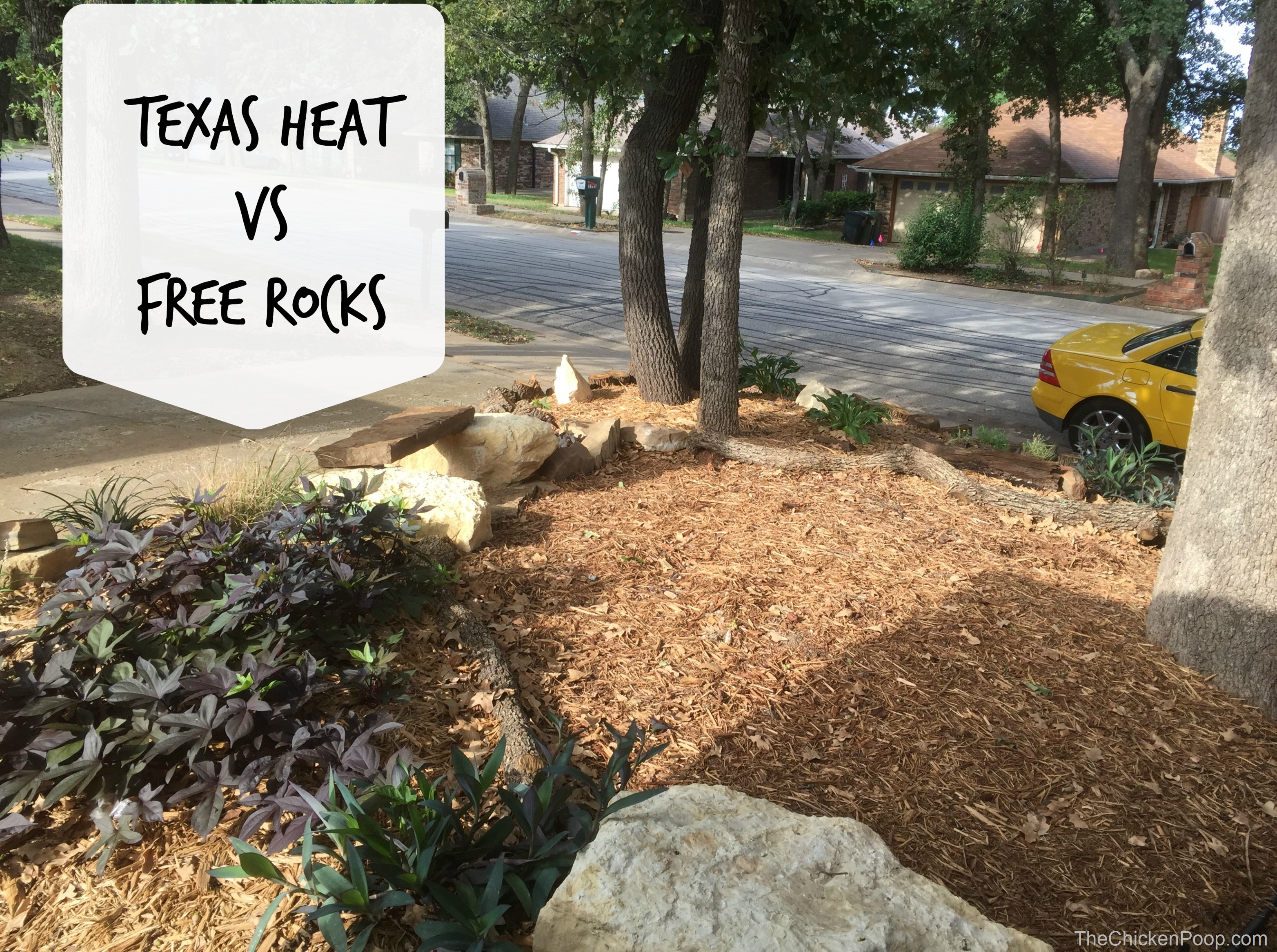 Texas Heat vs Free Rocks
